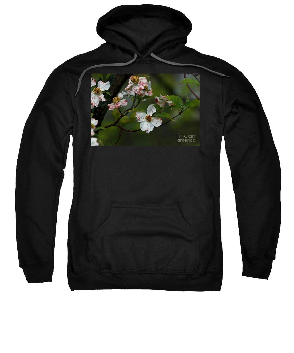 Dogwood Sweatshirt featuring the photograph Rainy Day Dogwood by Douglas Stucky