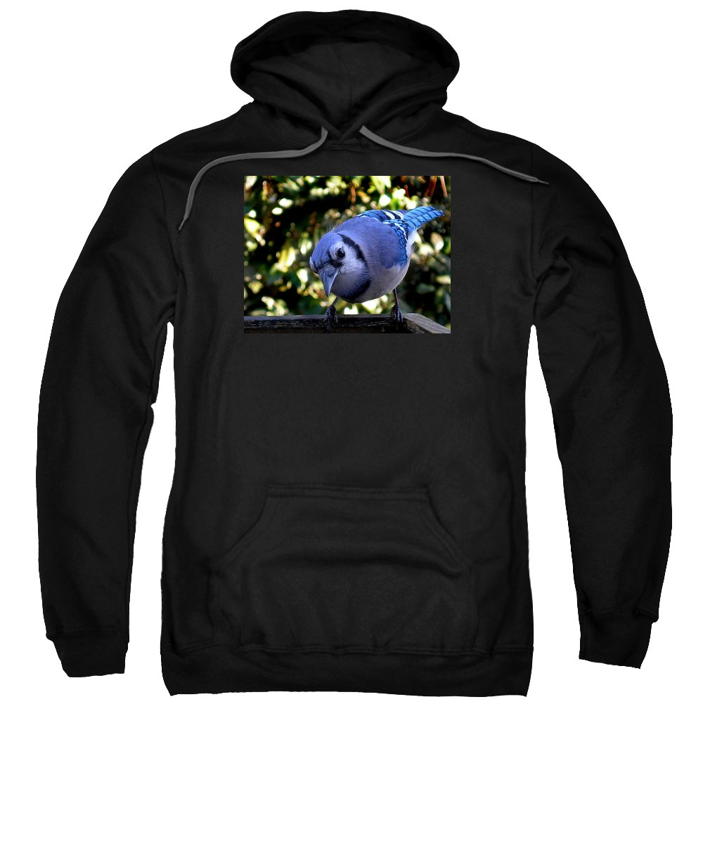 Blue Jay Sweatshirt featuring the photograph Raucous by Skip Willits