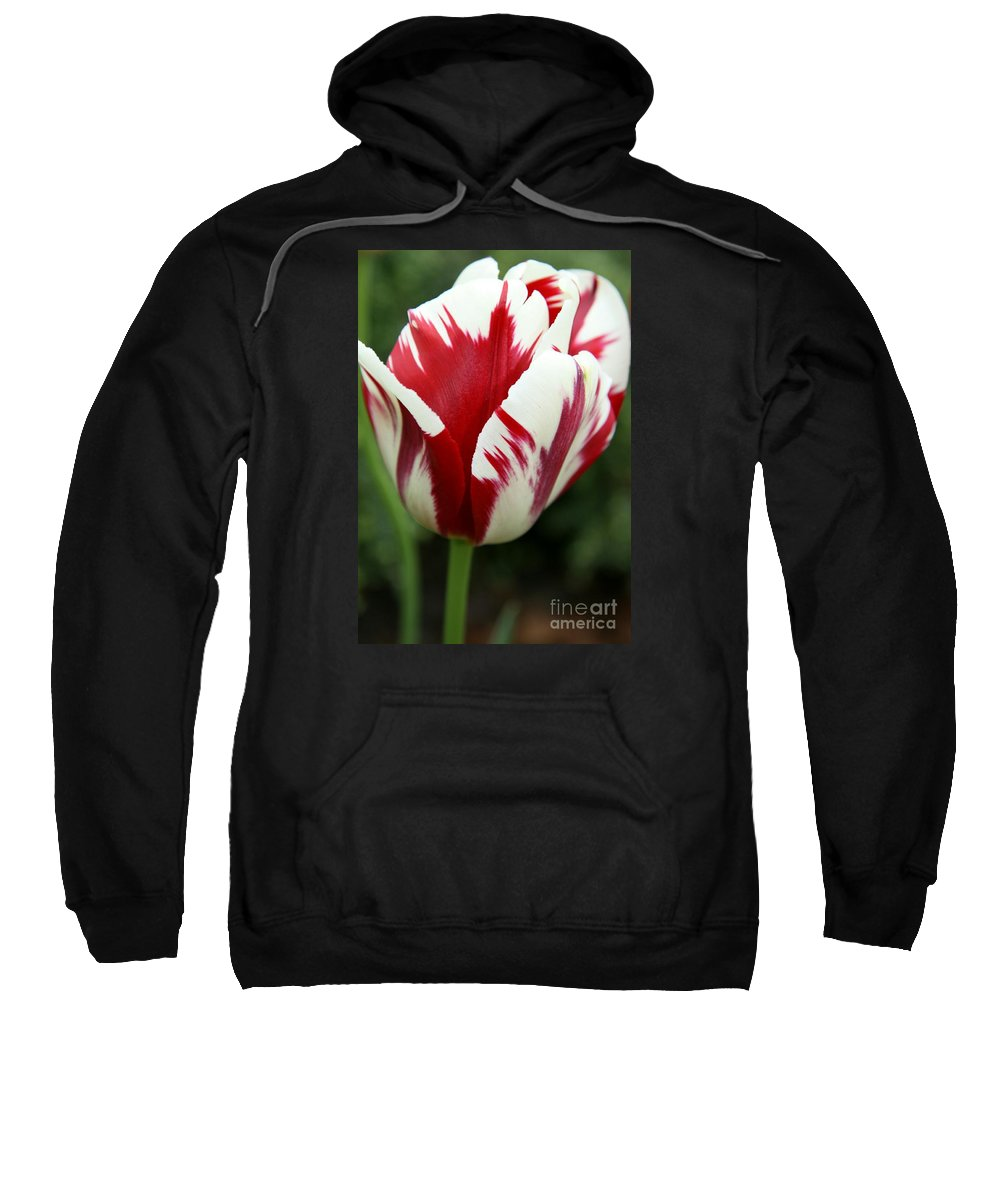 Tulip Sweatshirt featuring the photograph Red And White by Christiane Schulze Art And Photography