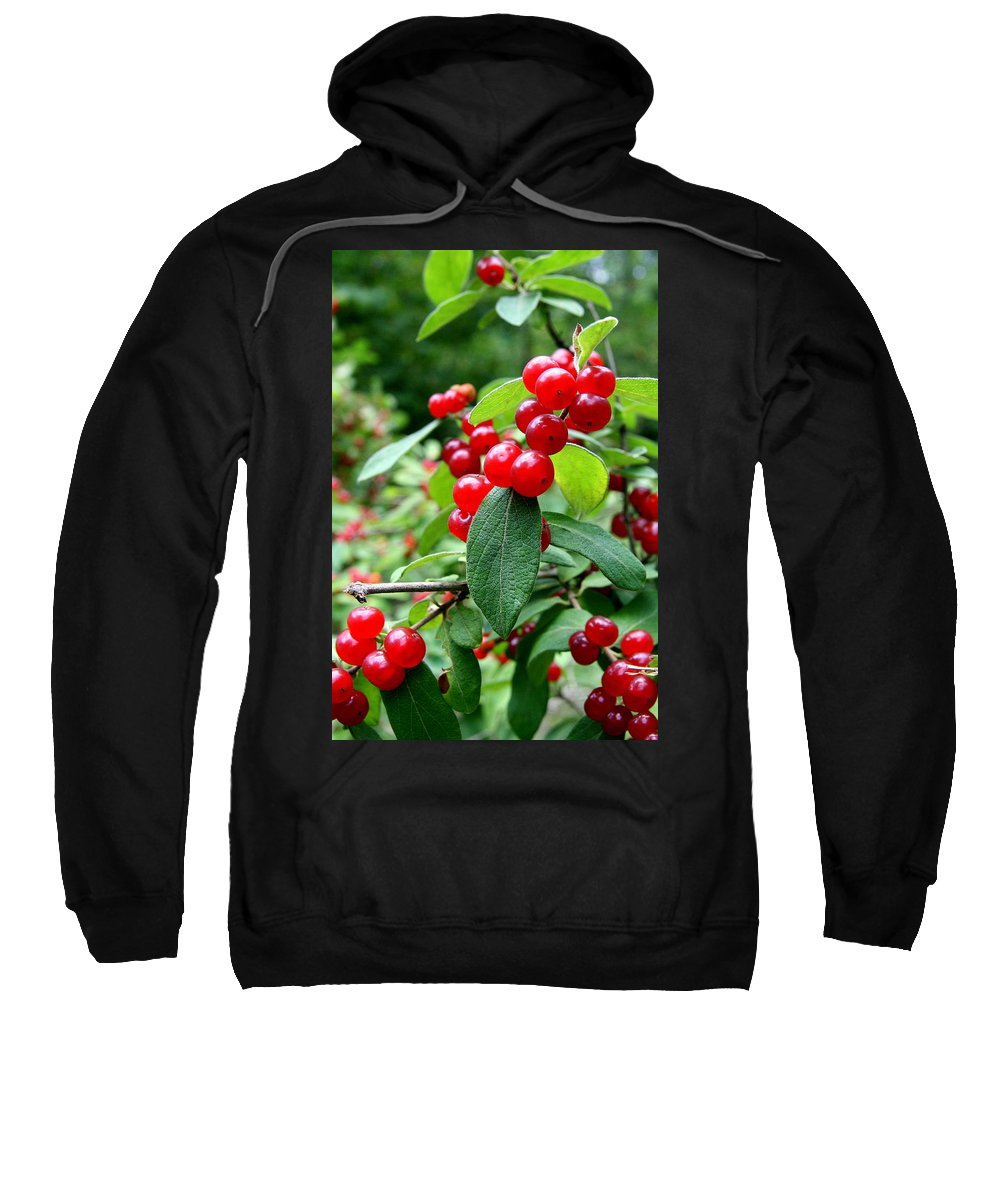 Red Berries Sweatshirt featuring the photograph Red Flare by Neal Eslinger