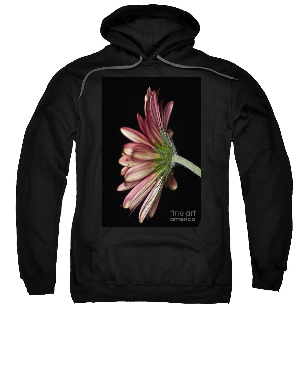 Red Gerbera Flower Sweatshirt featuring the photograph Red Gerbera 5 by Steve Purnell