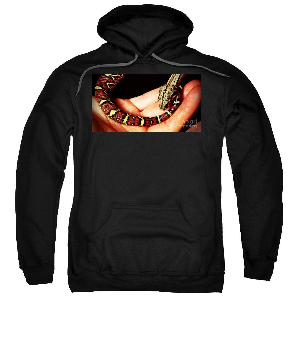Red Tail Baby Boa - Snake - Pet Sweatshirt