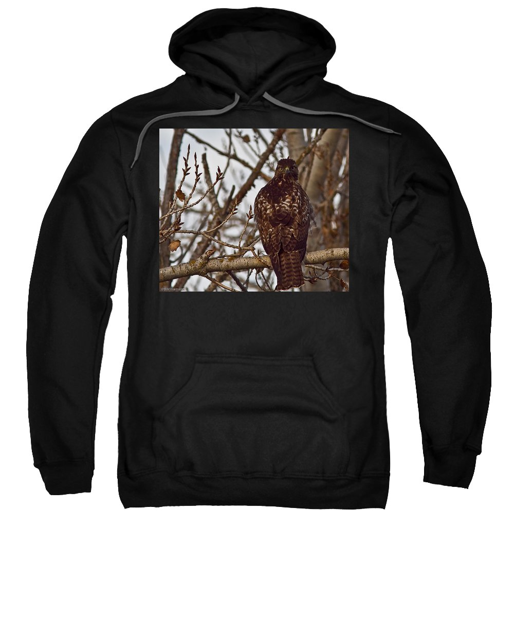 Hawk Sweatshirt featuring the photograph Red Tail Hawk by Brian Williamson