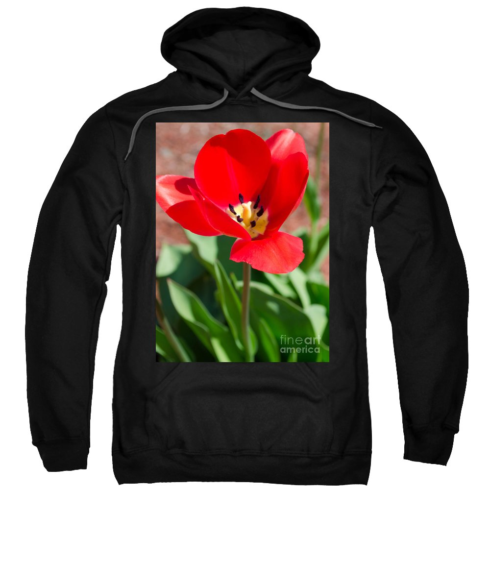 Flower Sweatshirt featuring the photograph Red Tulip by Andrea Anderegg