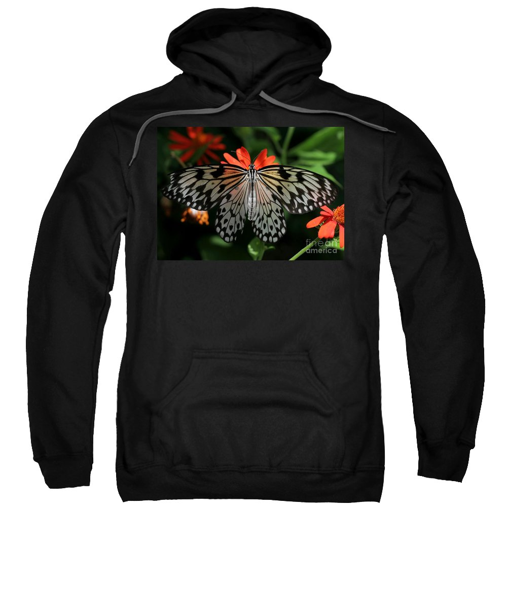 Butterfly Sweatshirt featuring the photograph Rice Paper Butterfly Elegance by Sabrina L Ryan