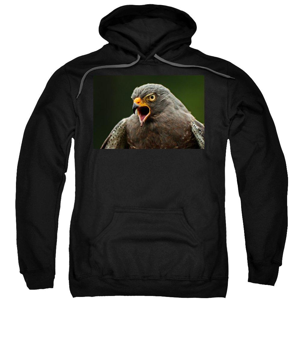 Roadside Sweatshirt featuring the photograph Roadside Hawk by Jess Kraft