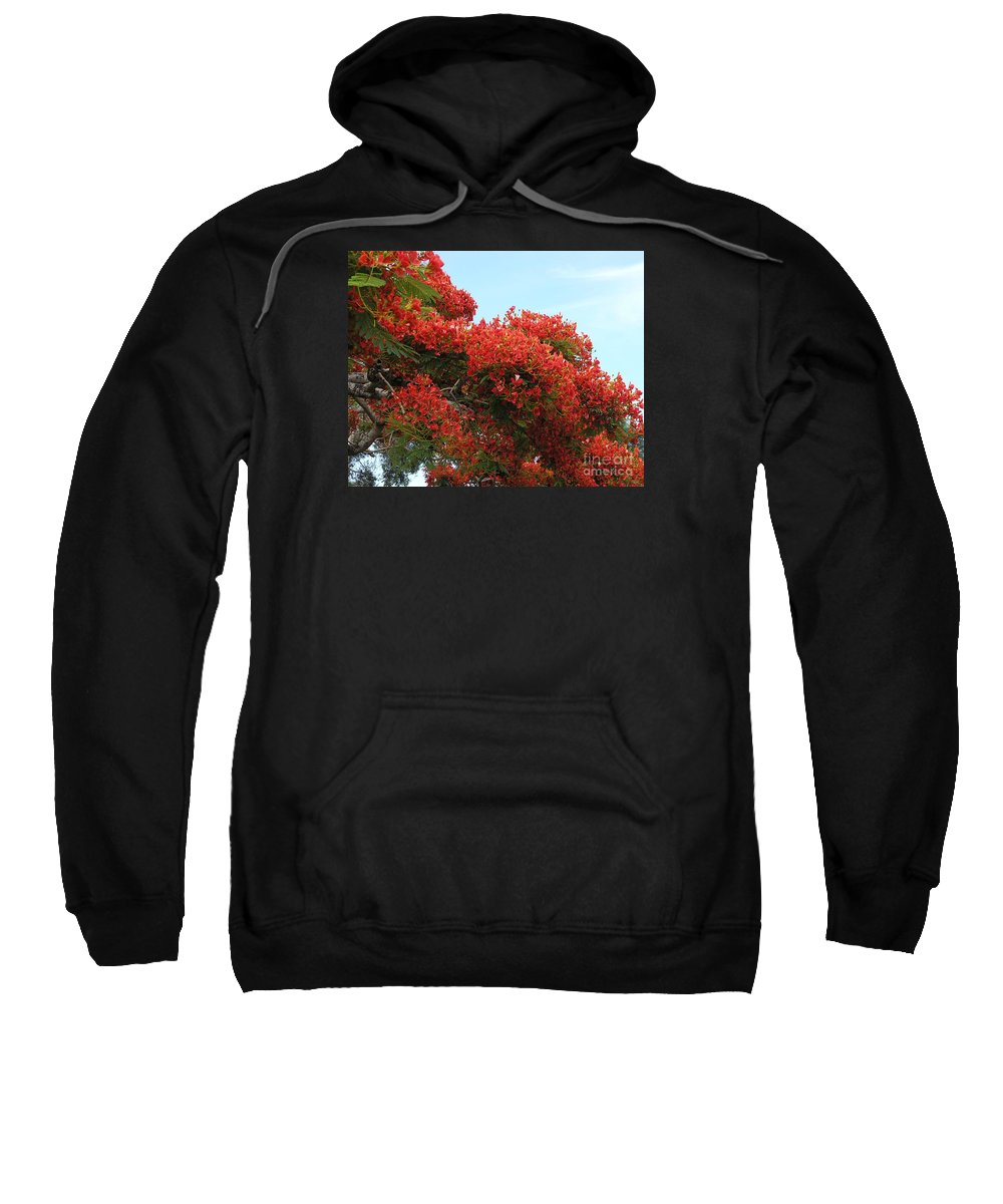 Trees Sweatshirt featuring the photograph Royal Poinciana Branch by Mary Deal