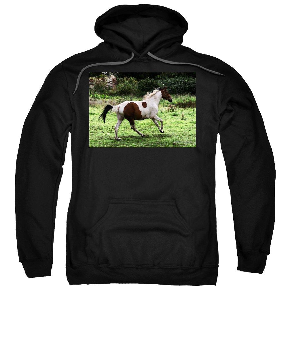 Pinto Sweatshirt featuring the photograph Running Pinto Horse by Angel Ciesniarska