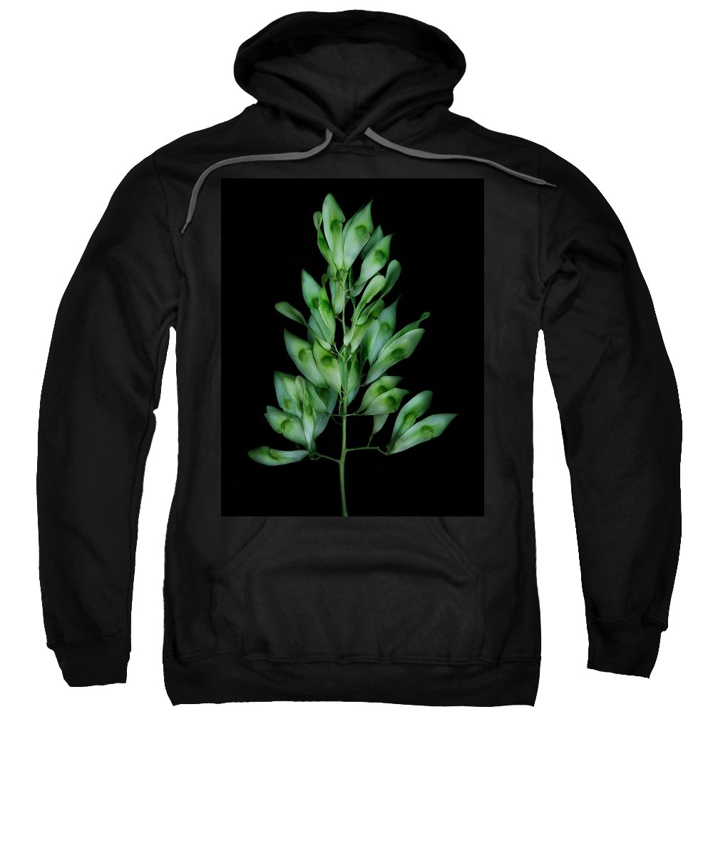Seed Sweatshirt featuring the photograph Seed Tree by Robert Woodward