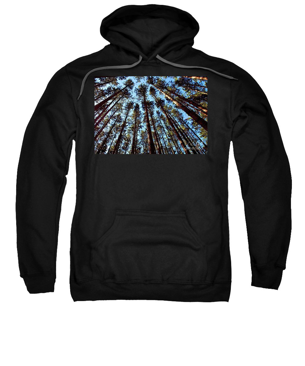 Tree Sweatshirt featuring the photograph Seeing The Forest Through The Trees by Patti Smith