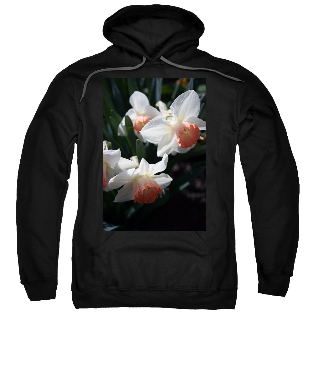 Flowers Sweatshirt featuring the photograph Signs Of Spring by Kay Novy