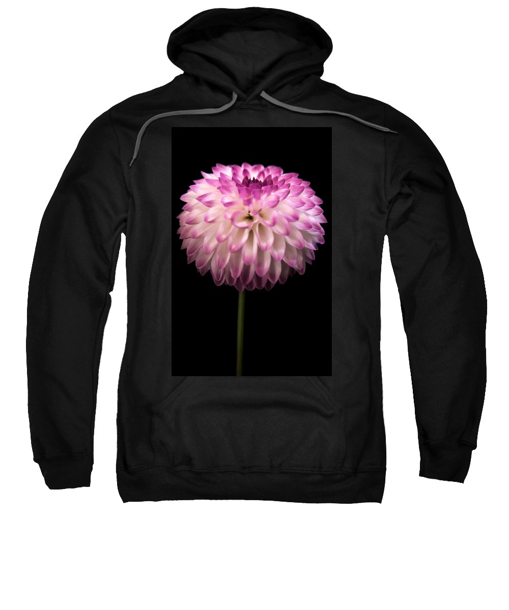 Dahlia Sweatshirt featuring the photograph Single And Beautiful by Sally Bauer