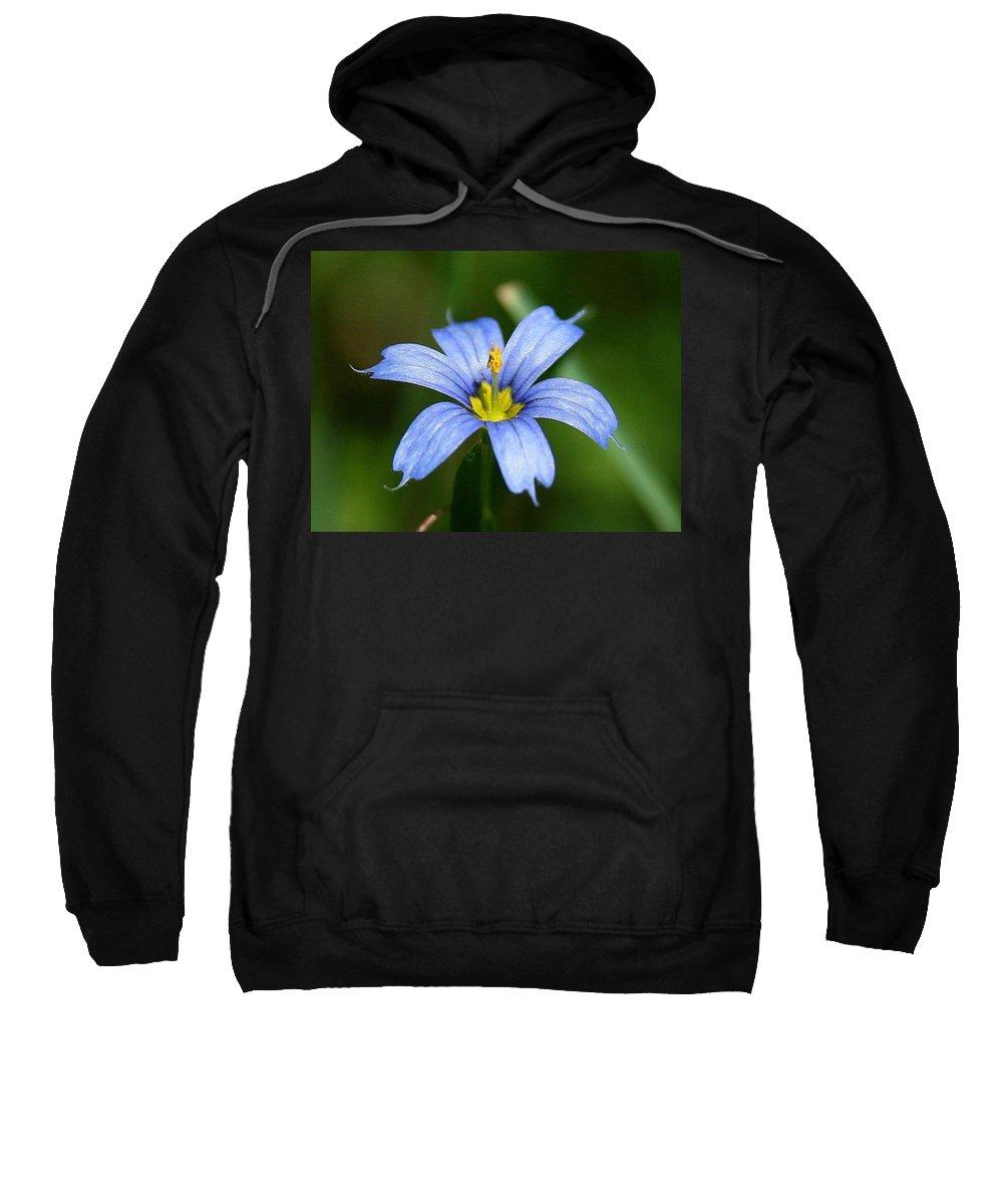 Sisyrinchium Angustifolium Sweatshirt featuring the photograph Sisyrinchium Angustifolium by Neal Eslinger