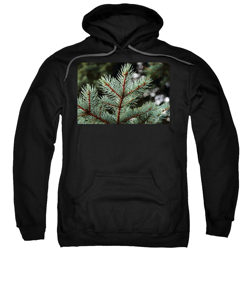Pine Trees Sweatshirt featuring the photograph Small Pine by Scott Hill