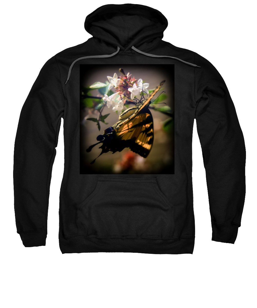 Morning Light Sweatshirt featuring the photograph Soft As The Morning Light by Karen Wiles