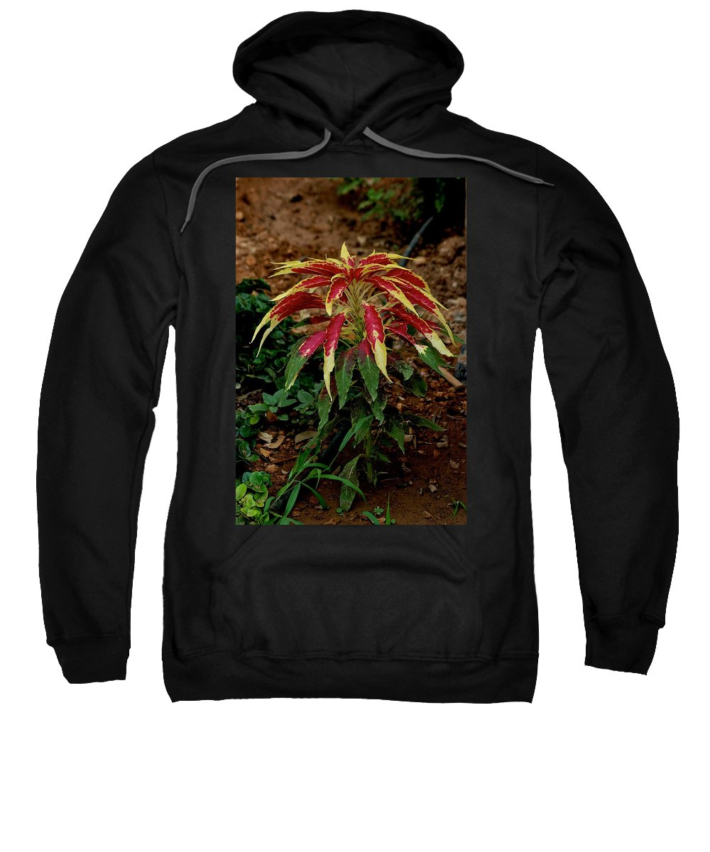 Bedding Plants Sweatshirt featuring the photograph Sometimes by Joseph Yarbrough