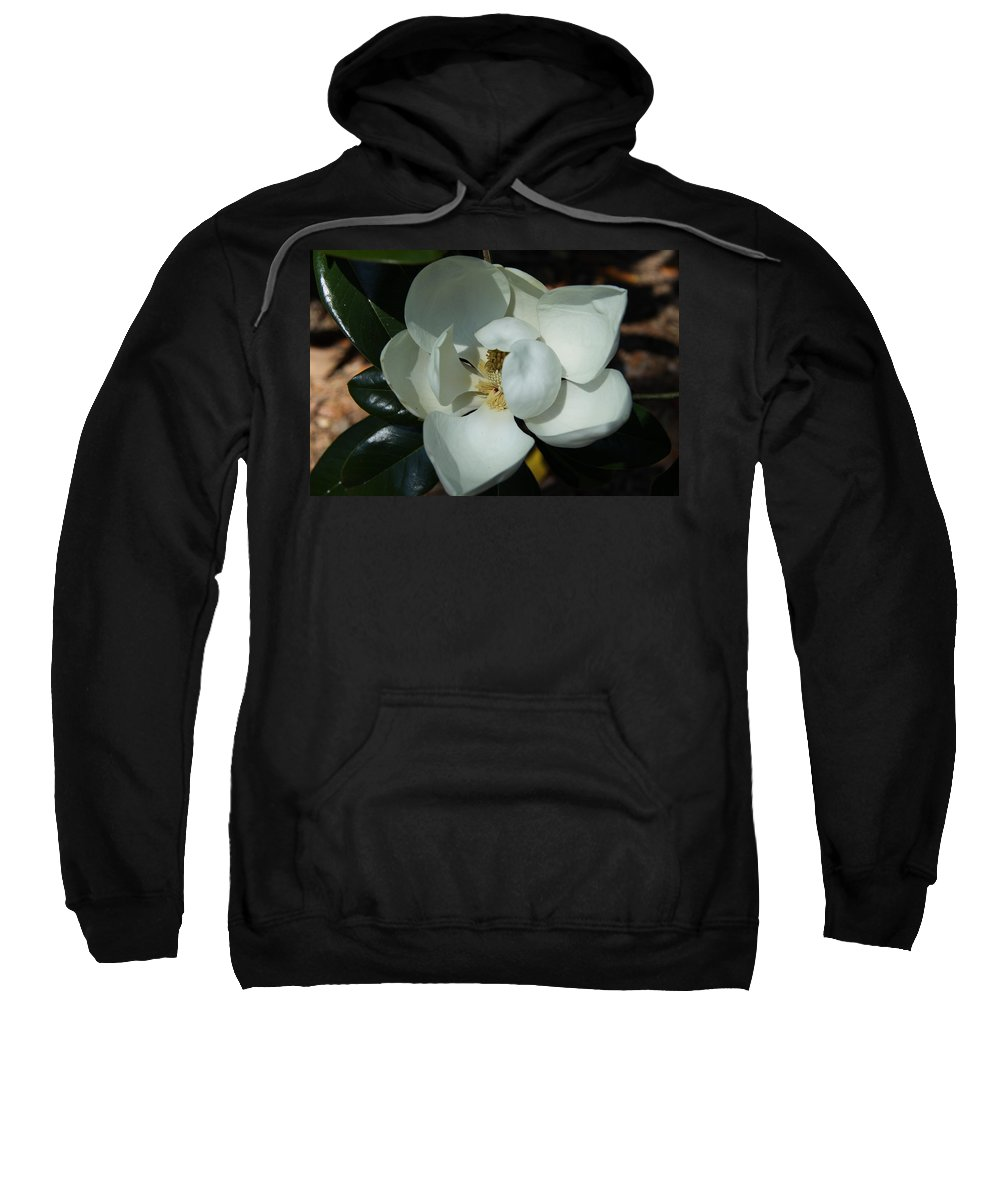 Magnolia Sweatshirt featuring the photograph Southern Bell I by Christiane Schulze Art And Photography