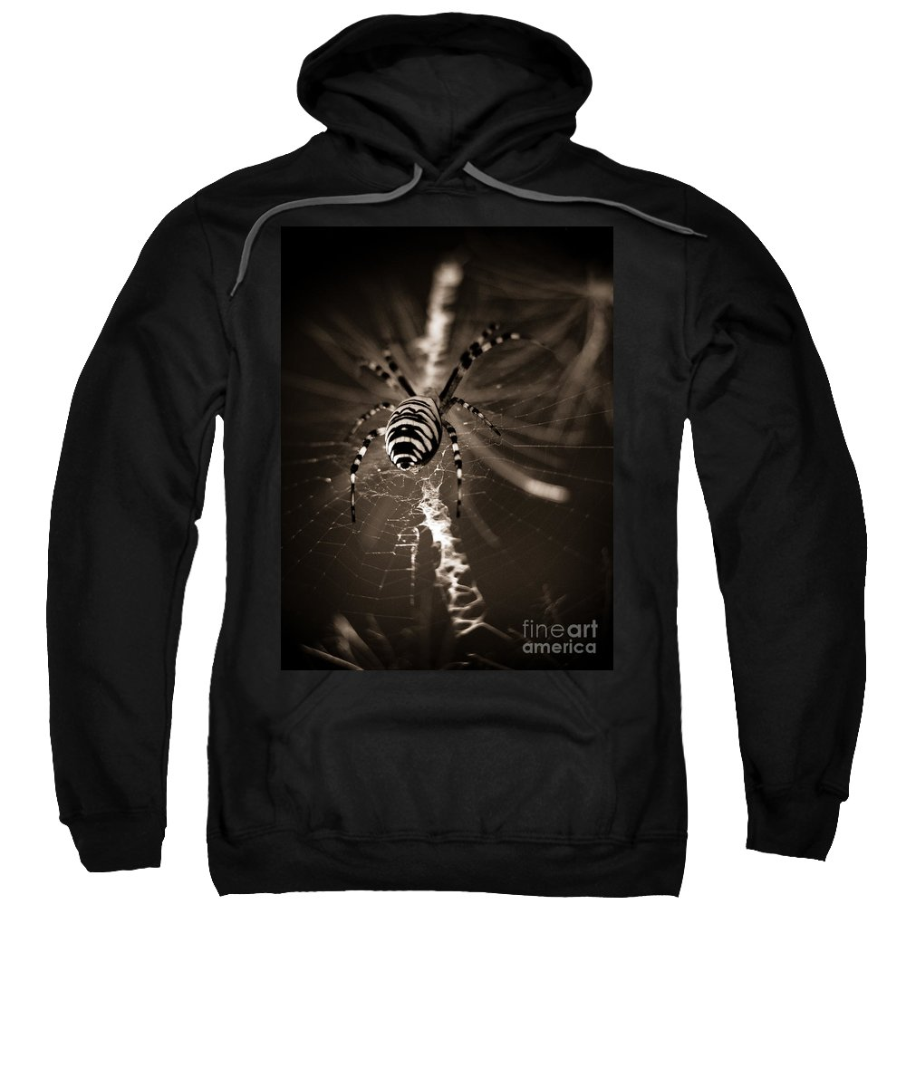 Spider In Waiting Sweatshirt featuring the photograph Spider In Waiting by Brothers Beerens