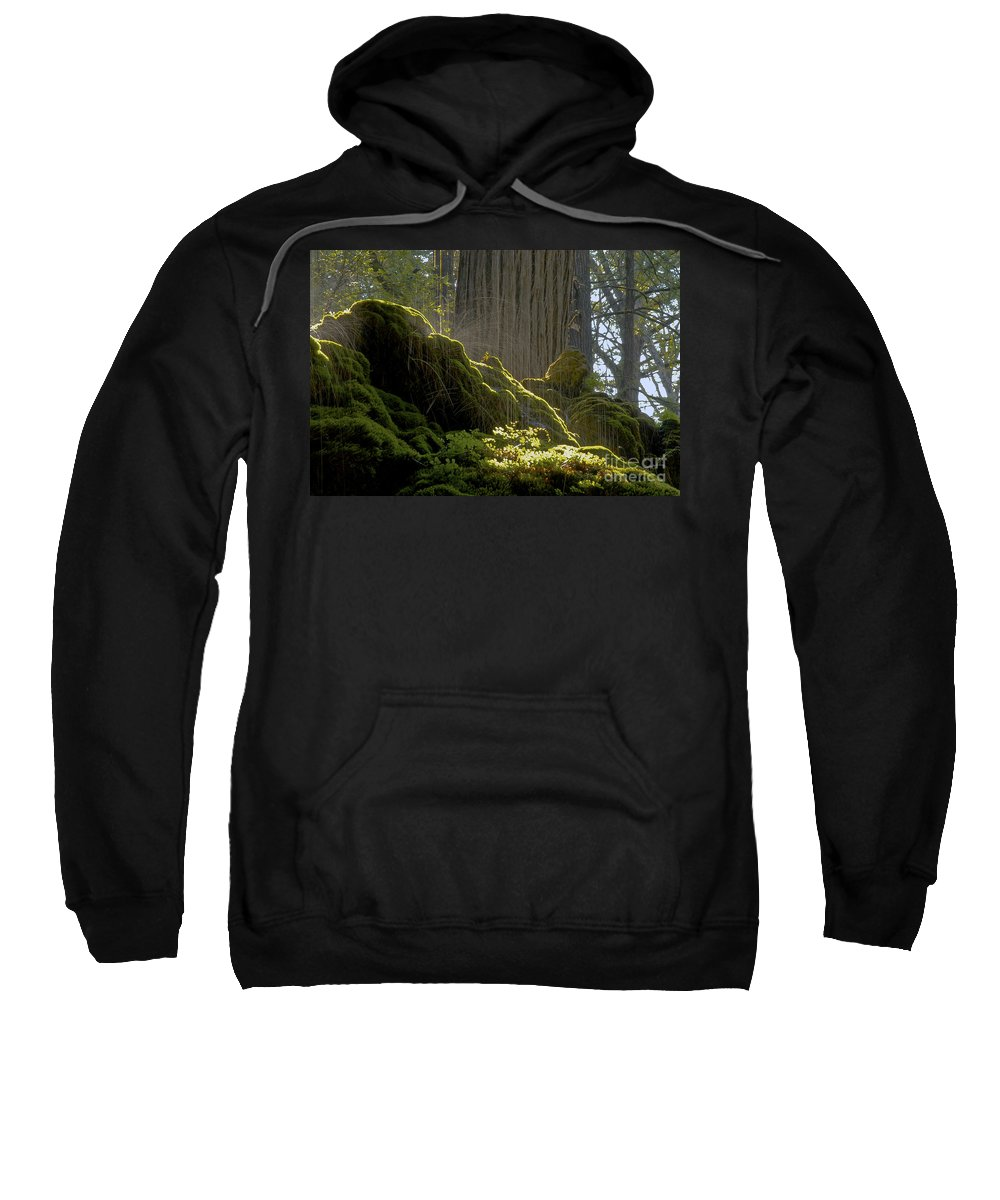 Westcave Preserve Round Mountain Texas Tree Trees Splatter Water Drip Drips Foliage Plant Plants Park Parks Cave Caves Landscape Landscapes Sweatshirt featuring the photograph Splatter by Bob Phillips