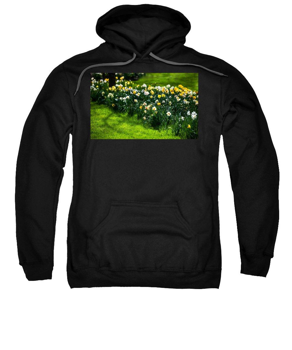 Spring Sweatshirt featuring the photograph Spring Daffodils. Park Keukenhof by Jenny Rainbow