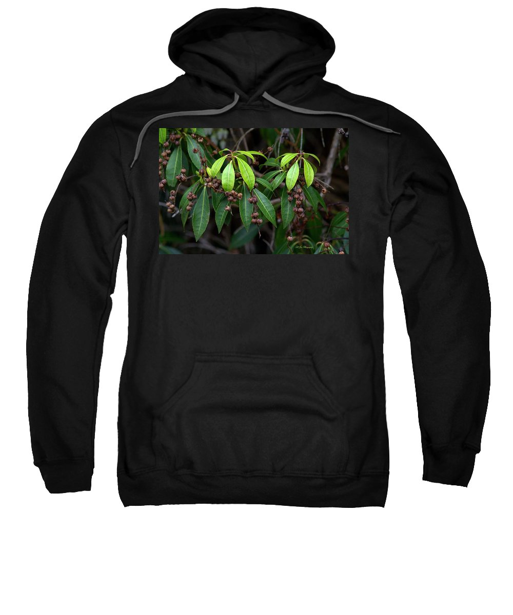 Greenery Sweatshirt featuring the photograph Spring Is Nigh by Jeanette C Landstrom
