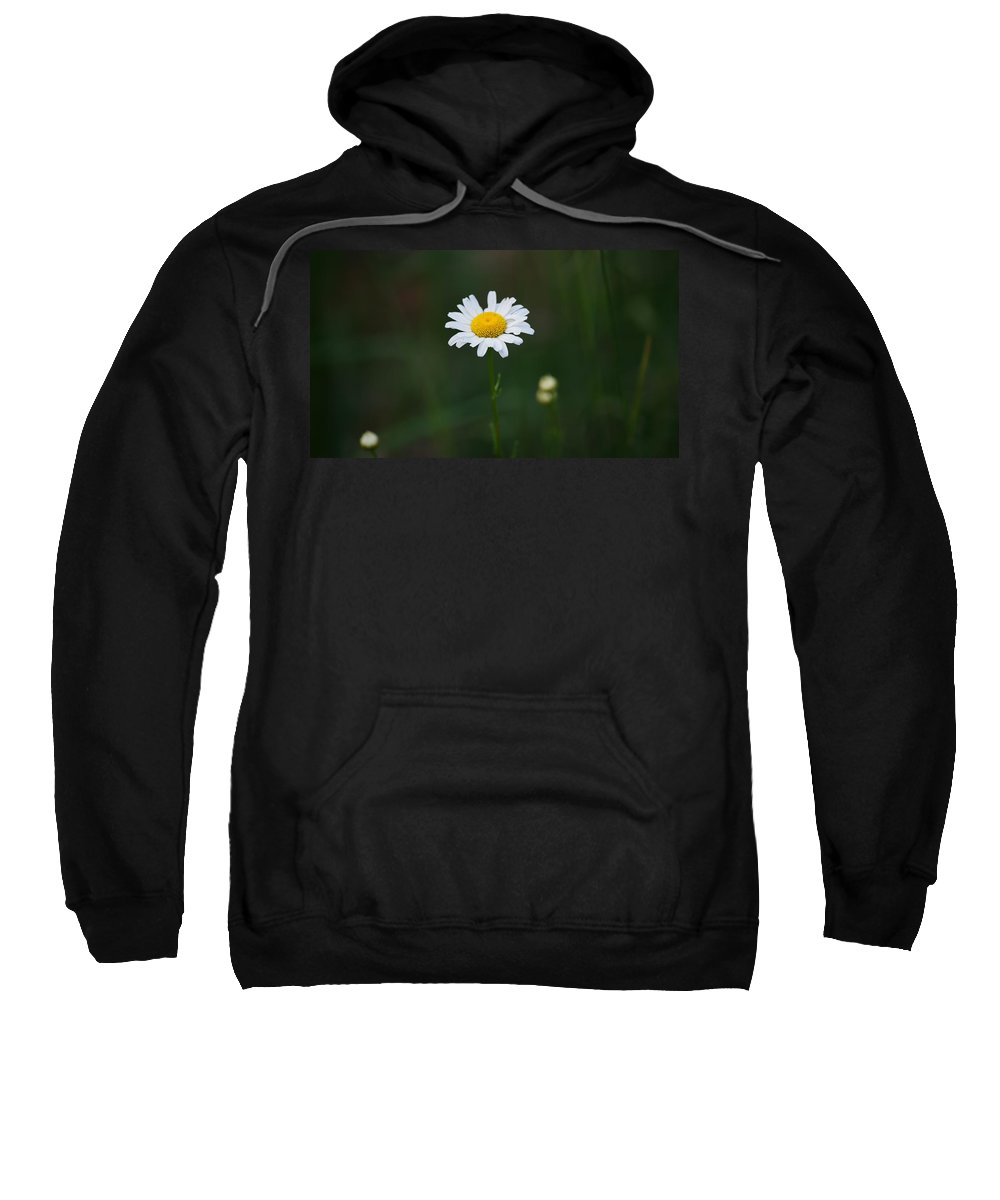 Daisy Sweatshirt featuring the photograph Stand Alone by Crystal Harman