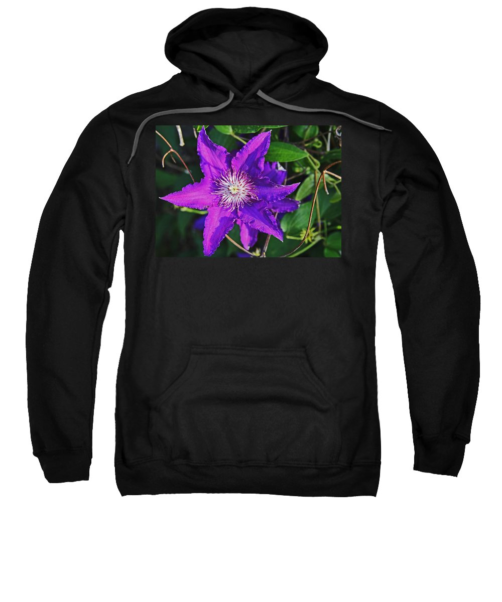 Purple Sweatshirt featuring the photograph Star by John Mullins
