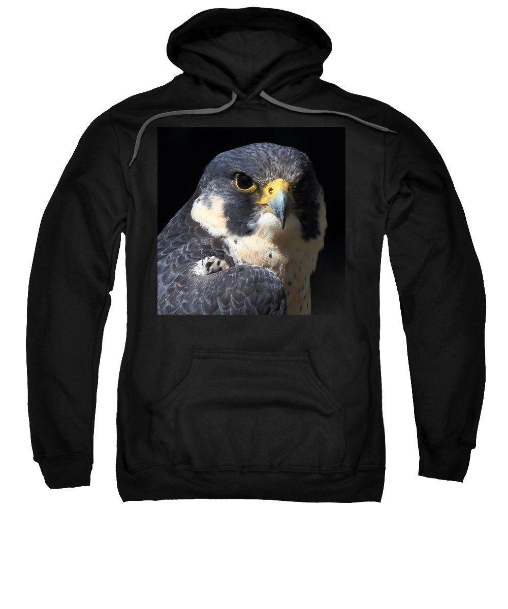 Peregrine Sweatshirt featuring the photograph Steely Stare by Randy Hall