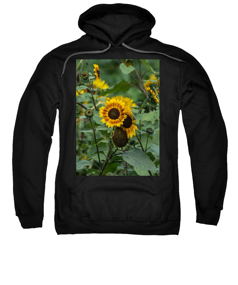 Flowers Sweatshirt featuring the photograph Striped Sunflower by Guy Whiteley