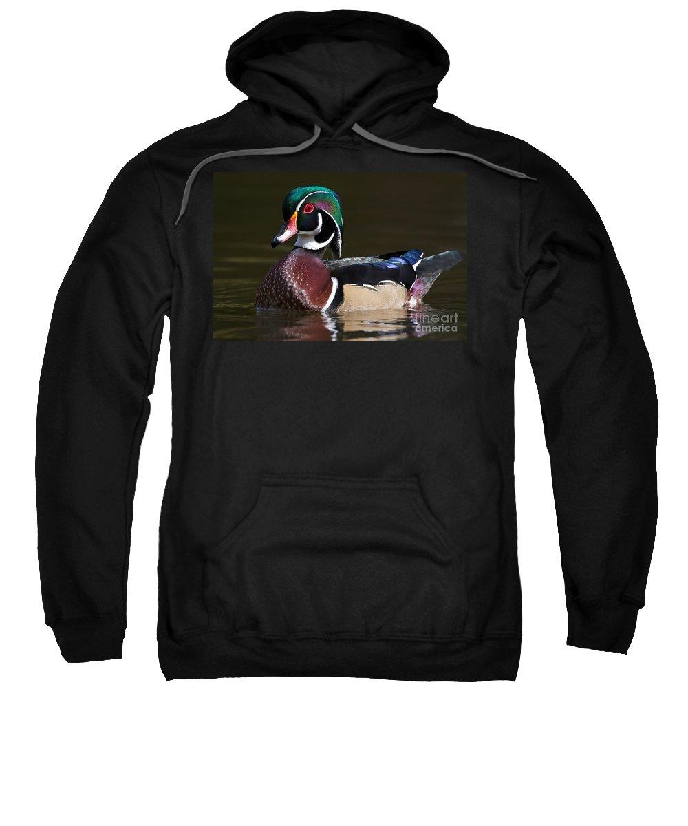 Woodduck Sweatshirt featuring the photograph Strutting His Stuff - Wood Duck by Nikki Vig