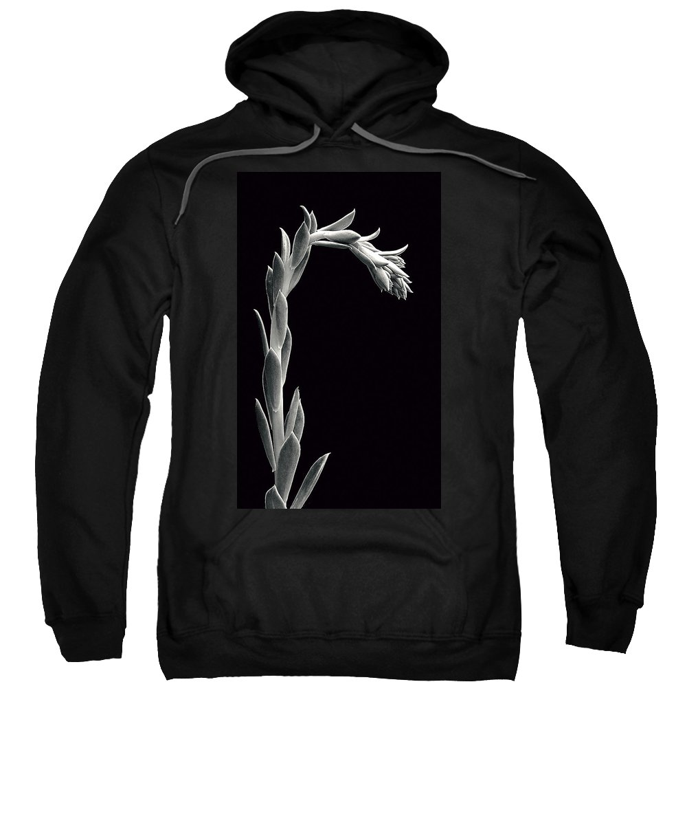 Succulent;black & White Sweatshirt featuring the photograph Succulent In Black And White by Robert Woodward