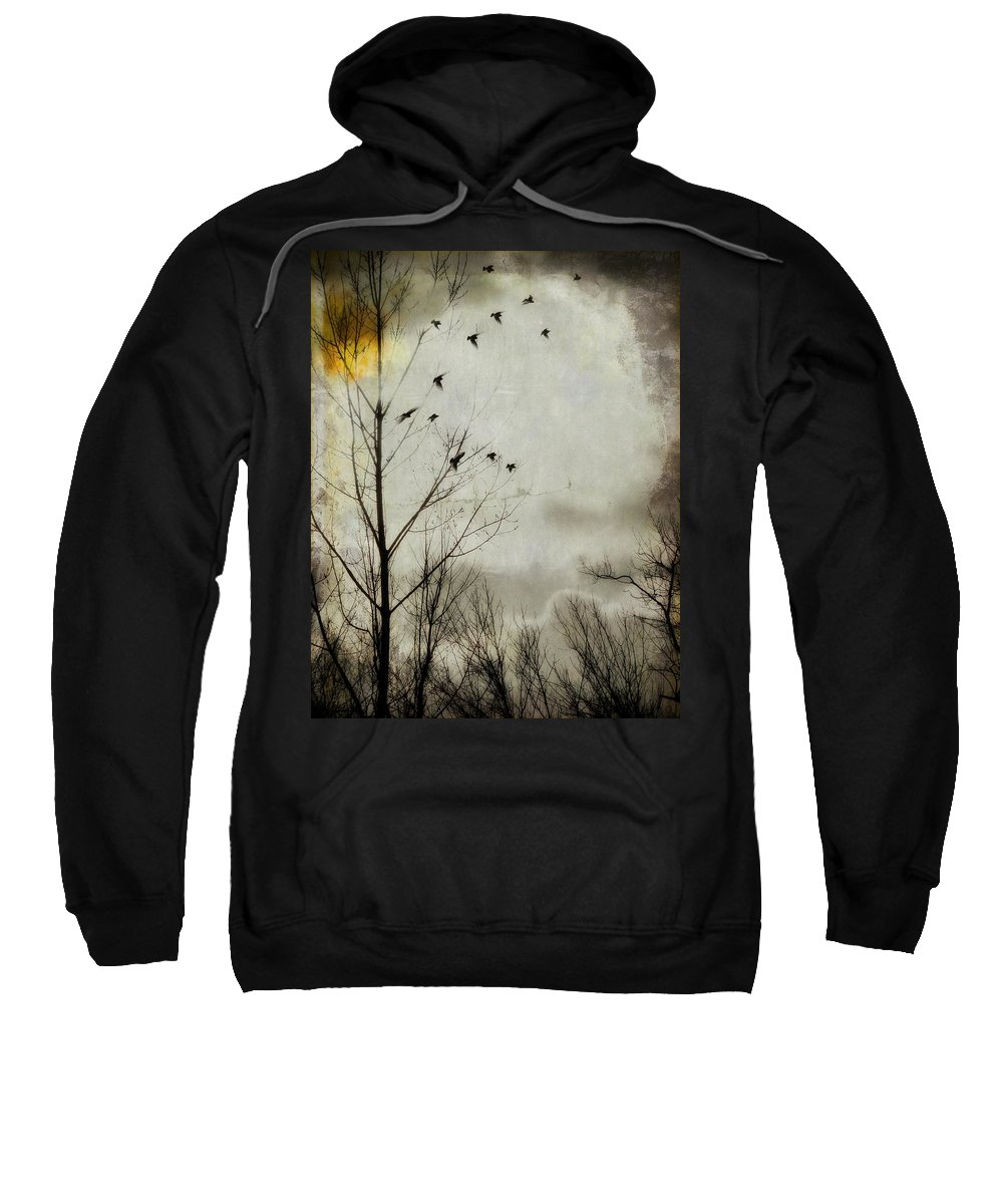 Tree Sweatshirt featuring the photograph The Sun Splashed Unto A Gray Day by Gothicrow Images