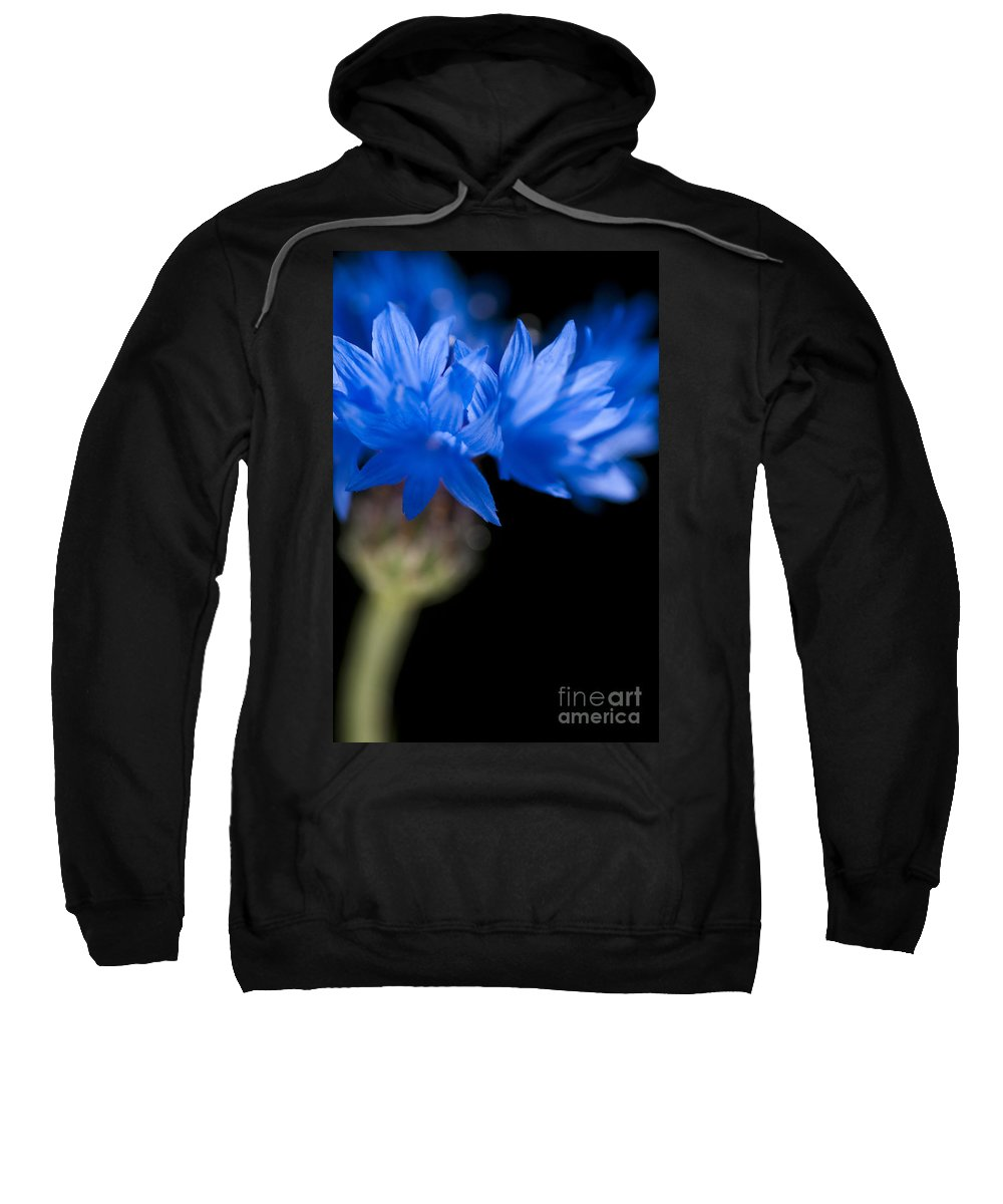 Floral Sweatshirt featuring the photograph Sunkissed Cornflower by Anne Gilbert