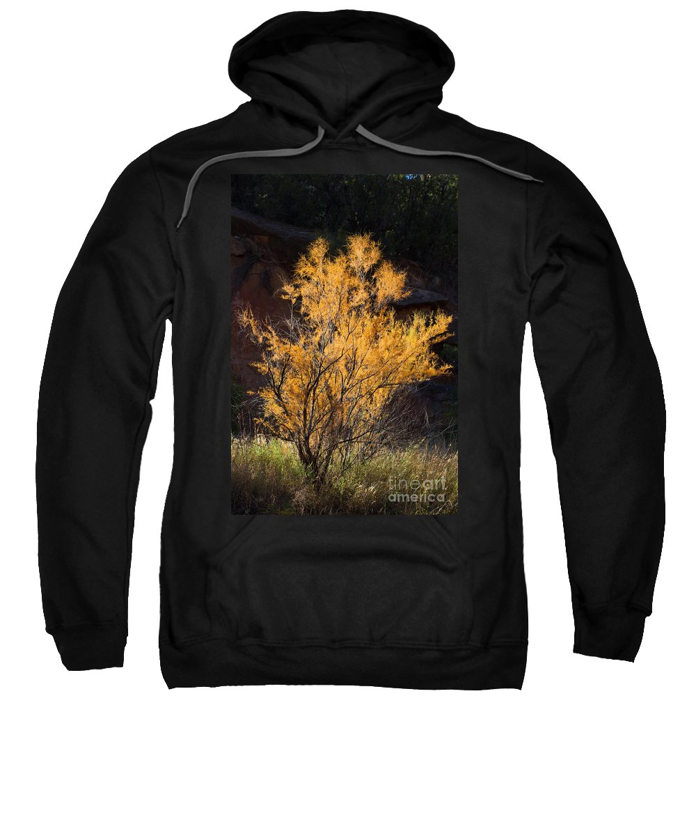 Texas Sweatshirt featuring the photograph Sunlit Tree In Palo Duro Canyon 110213.06 by Ashley M Conger