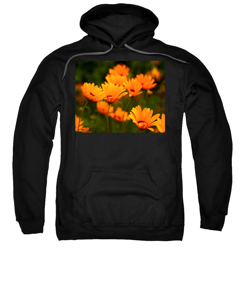 Yellow Sweatshirt featuring the photograph Sunny Floral by Lindley Johnson