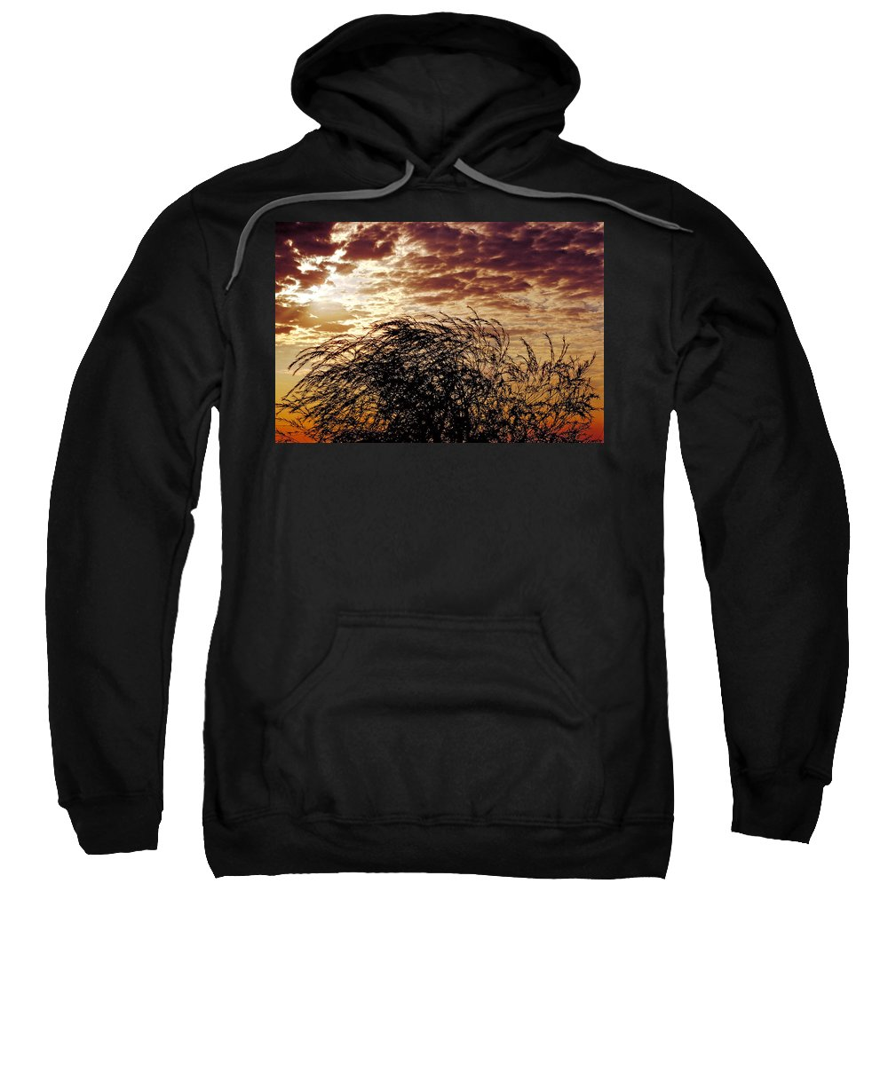 Nature Sweatshirt featuring the photograph Sunrise And Lacy Tree by Thomas Firak