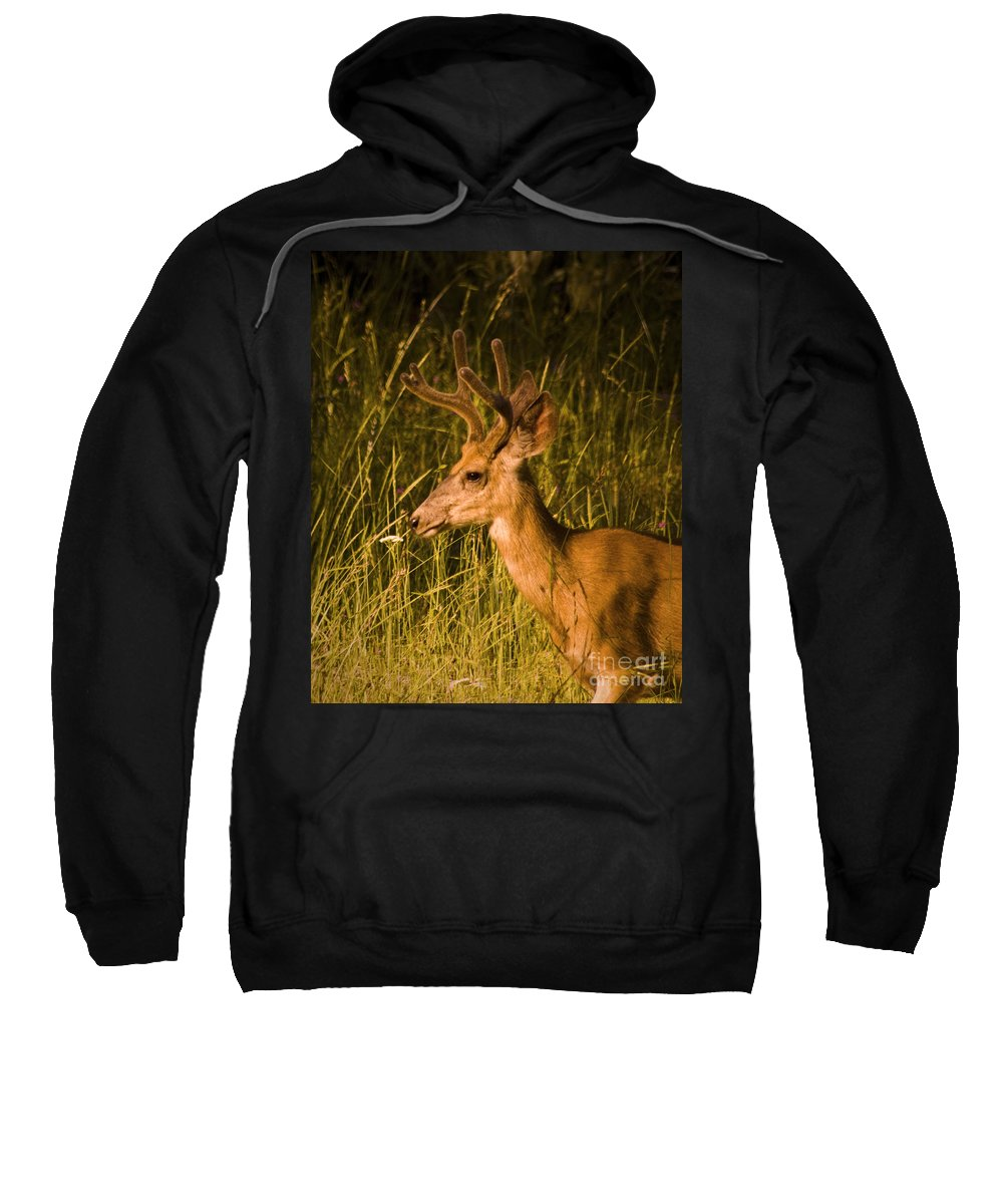 Buck Sweatshirt featuring the photograph Sunset Buck by Andrea Goodrich