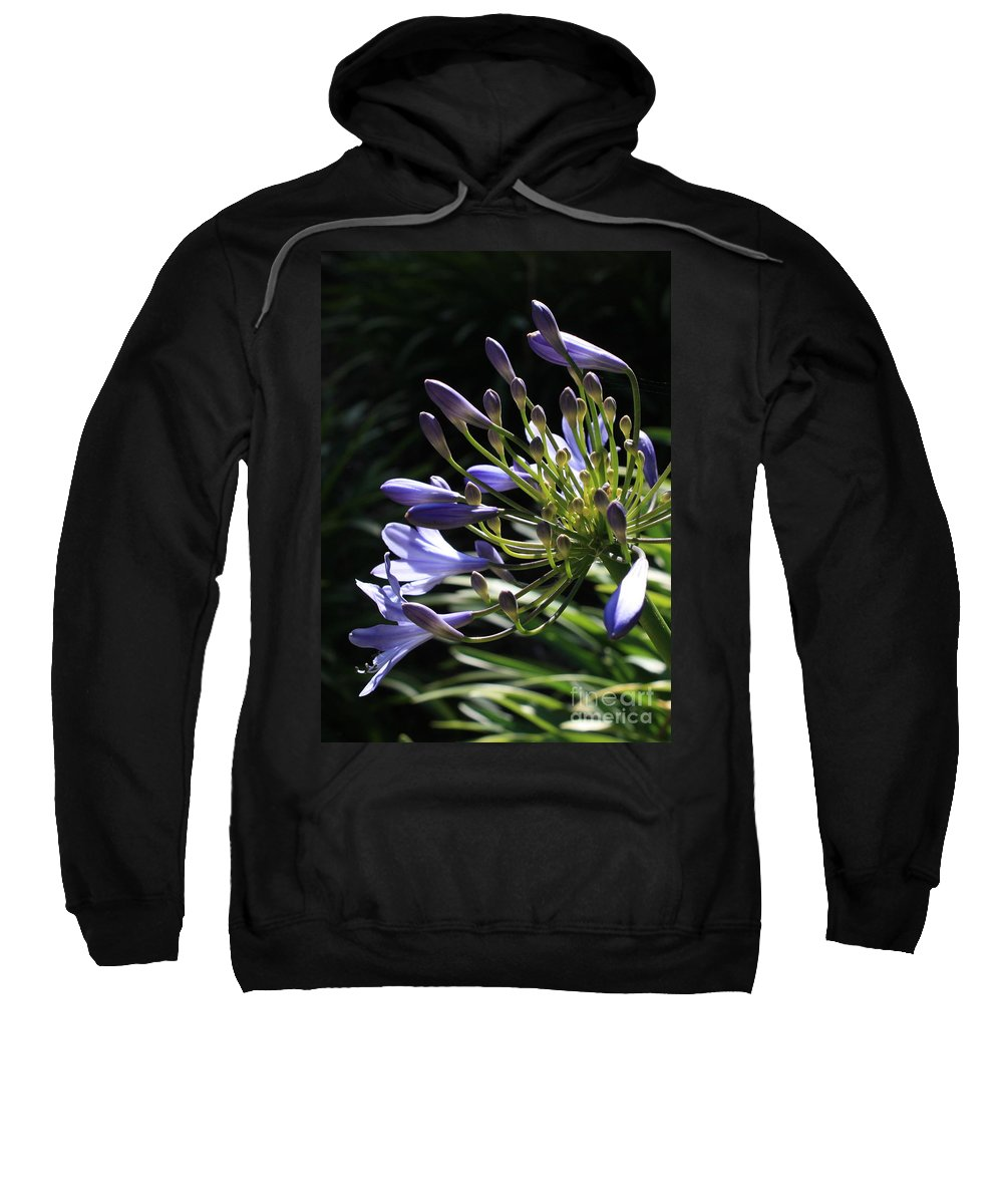 African Lily Sweatshirt featuring the photograph Sunshine On Agapanthus by Carol Groenen