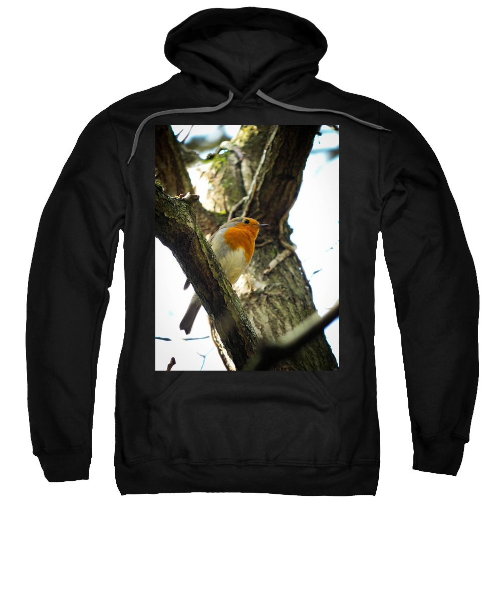 Robin Sweatshirt featuring the photograph Sweet Robin by Tracey Beer