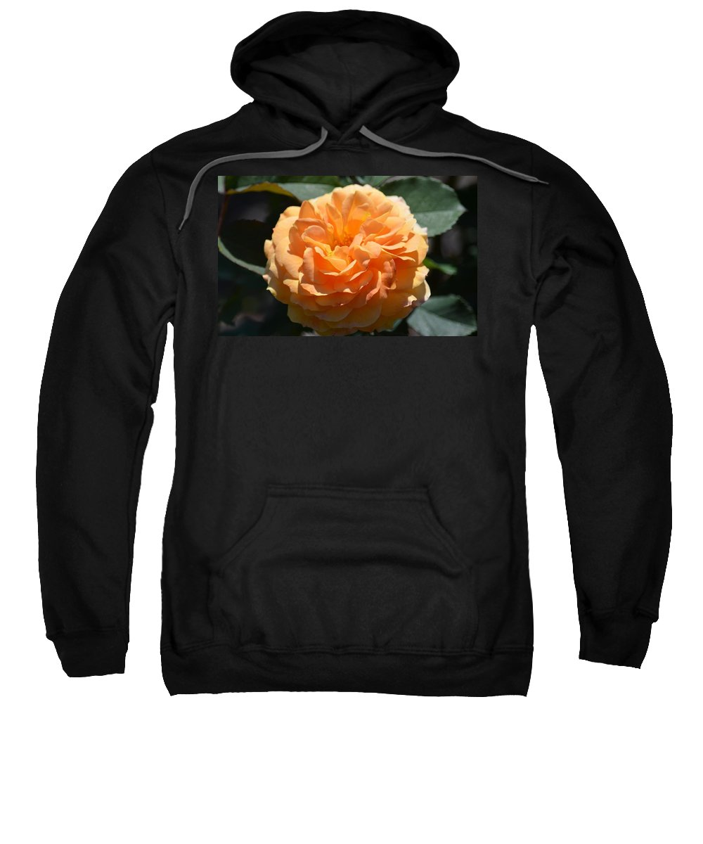 Swirling Peach Rose Sweatshirt featuring the photograph Swirling Peach Rose by Maria Urso