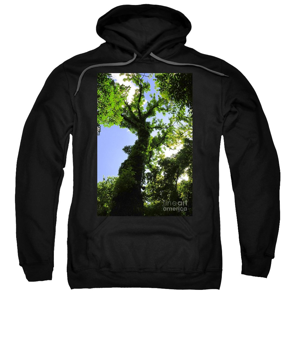 Tall Sweatshirt featuring the photograph Tall Trees by Kathleen Struckle