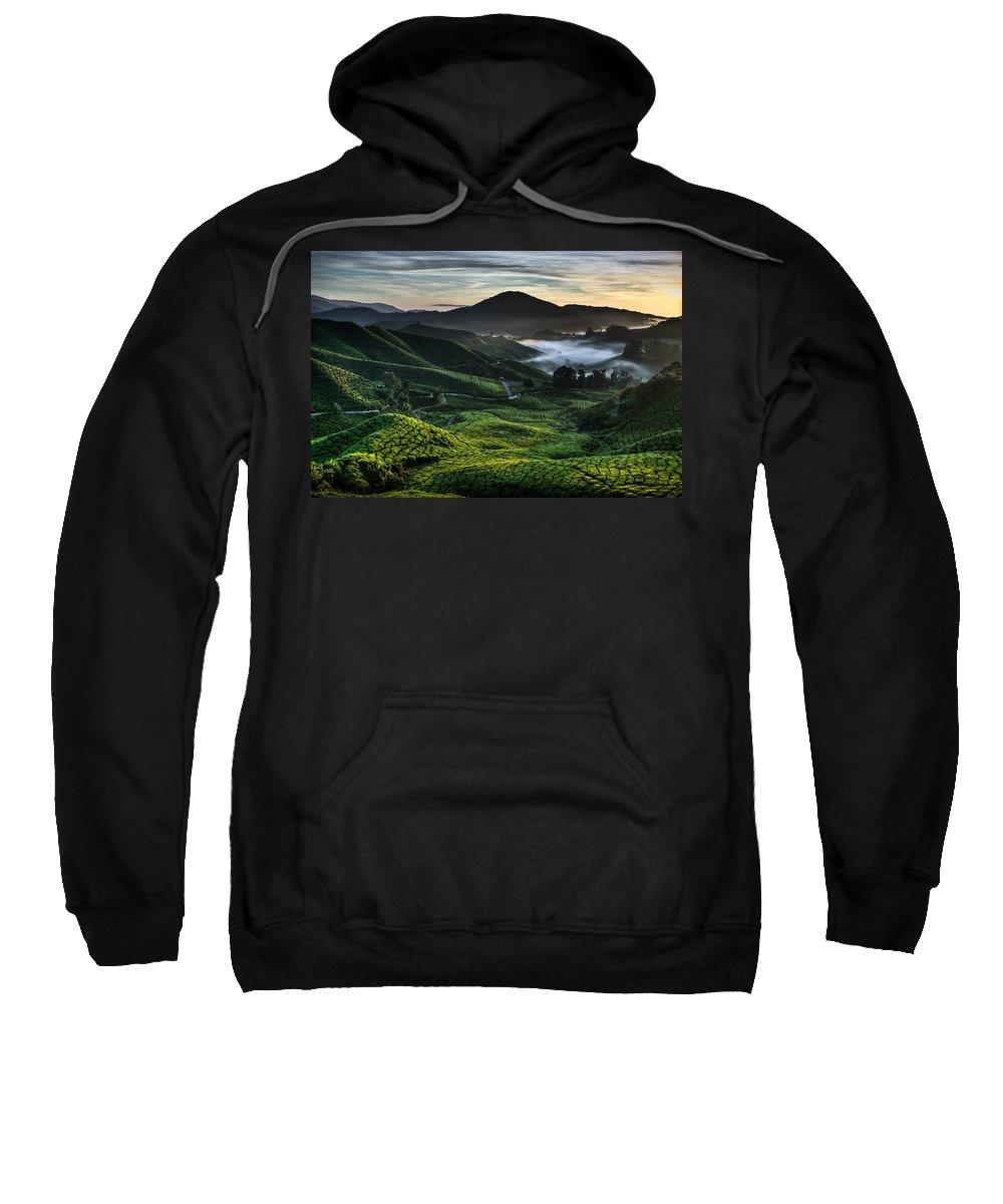 Tea Plantation Sweatshirt featuring the photograph Tea Plantation At Dawn by Dave Bowman