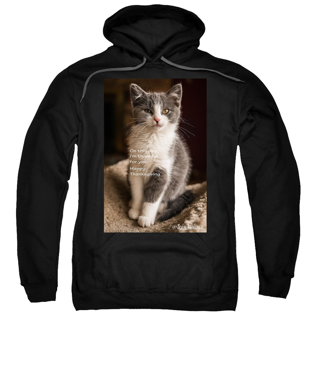 Katmai Kitty Sweatshirt featuring the photograph Thanksgiving Kitty by Joan Wallner