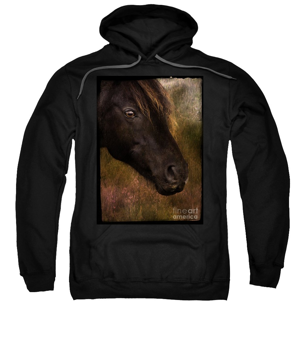 Pony Sweatshirt featuring the photograph that Wild Look by Angel Ciesniarska