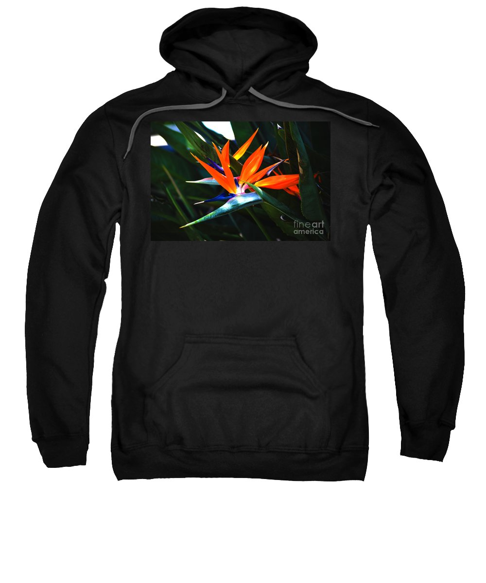 Bird Of Paradise Sweatshirt featuring the photograph The Beauty Of A Bird Of Paradise by Susanne Van Hulst