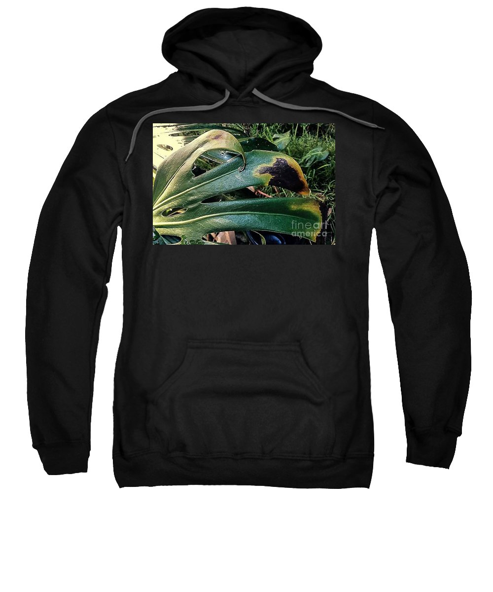 Plants Sweatshirt featuring the photograph The Burns by Fei A