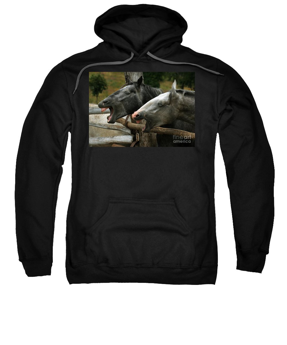 Horses Sweatshirt featuring the photograph the double Yawn by Angel Ciesniarska