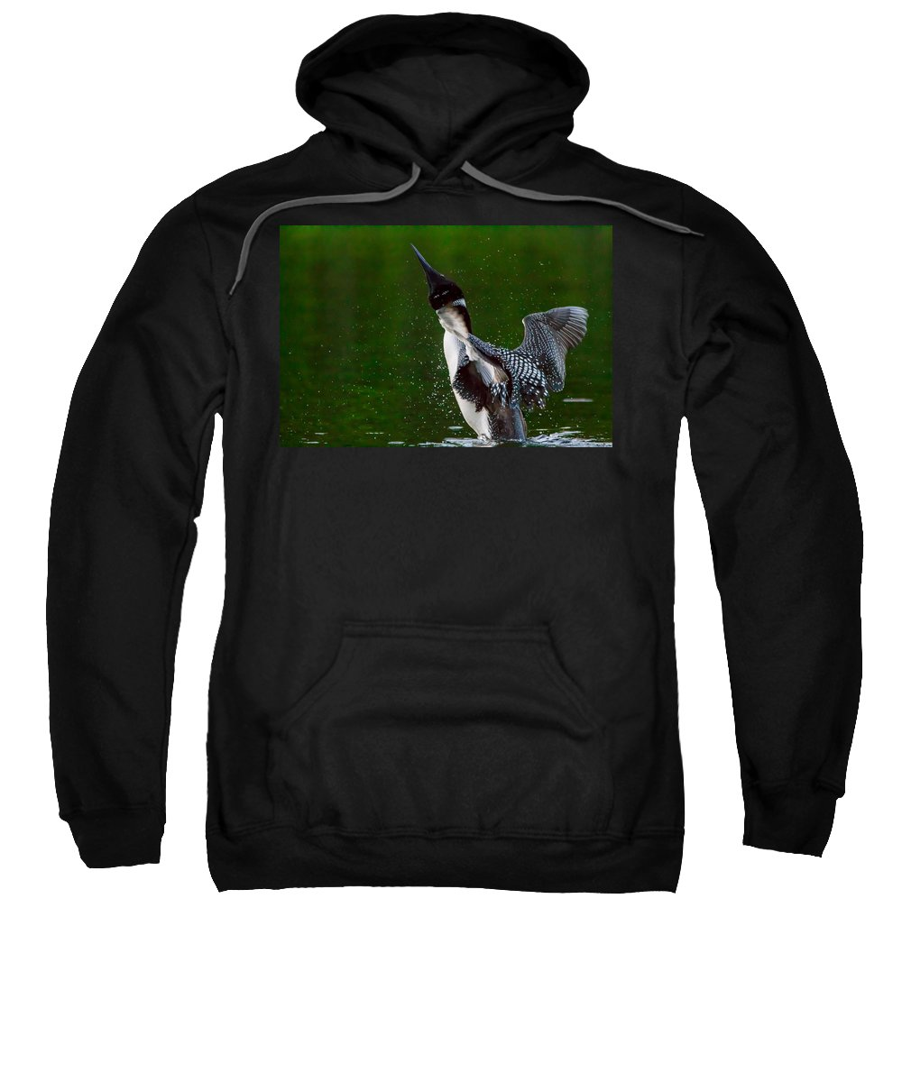 Float Sweatshirt featuring the photograph The Ever Elusive Loon Coming Out Of Dive by Eti Reid
