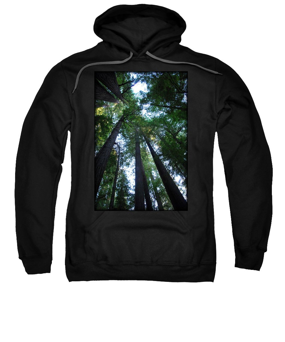 Redwoods Sweatshirt featuring the photograph The Giant Redwoods I by Kathy Sampson