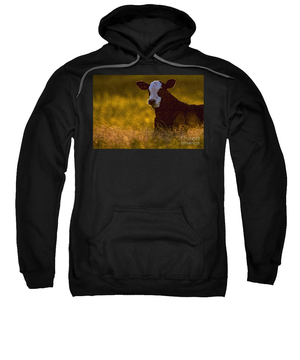 The Golden Calf Sweatshirt featuring the photograph The Golden Calf by Gary Holmes